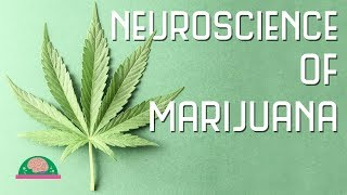 How Does Marijuana Affect Your Brain?