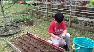 Planting Onion Bulbs - Red Yellow & White (p1): Backyard Organic Gardening Made Easy & Fun By Aiman