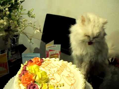 Cats Eating Birthday Cake YouTube