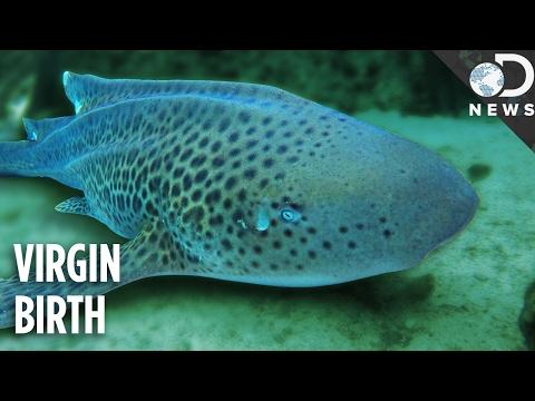 Asexual marine life