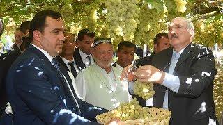 Президенты Беларуси и Таджикистана посетили виноградники и продегустировали урожай