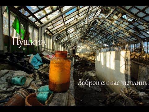 Город Пушкин (Ленинградская область) \ Заброшенные теплицы \ Vlog путешествий #172