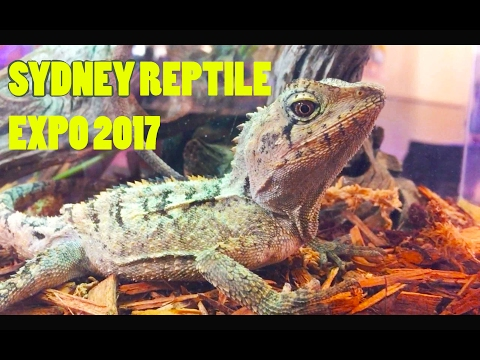SYDNEY CASTLE HILL REPTILE EXPO 2017