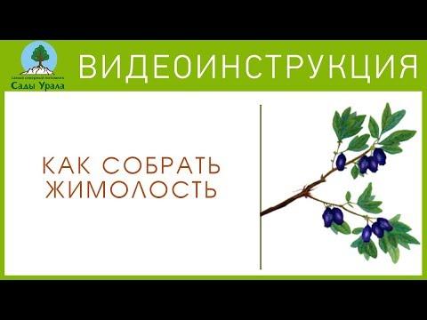 Как собрать ЖИМОЛОСТЬ. Видеоинструкция от Питомника