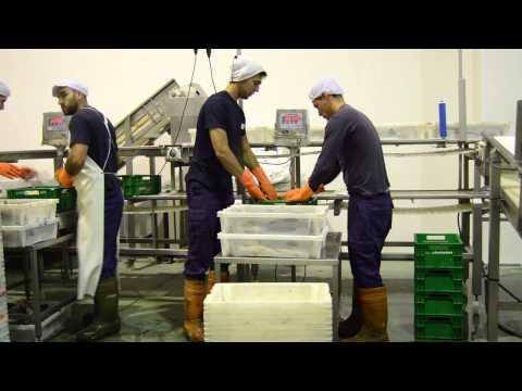 Proceso de trabajo Pescados Hermanos Lijó   WorkFlow