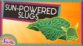 Solar-Powered Slugs