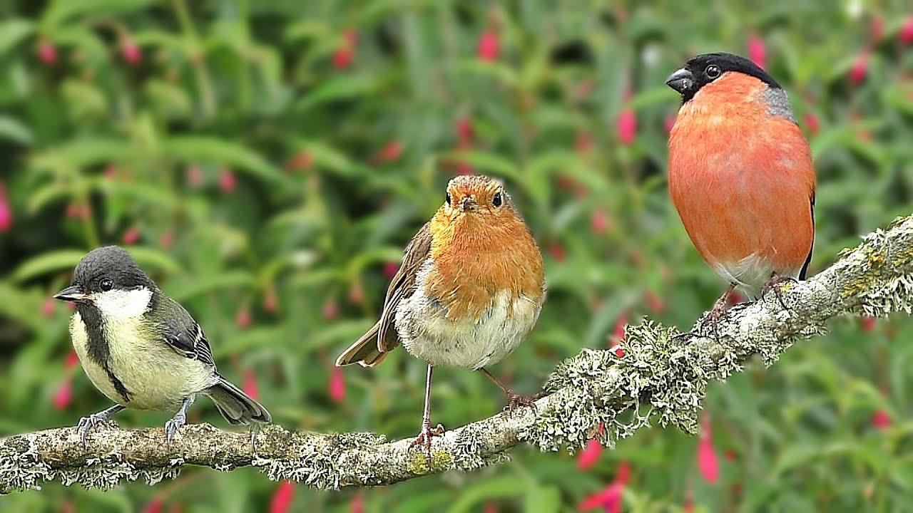 Birds in My Garden : Birds on The Branch - ONE HOUR ~ NEW ✅