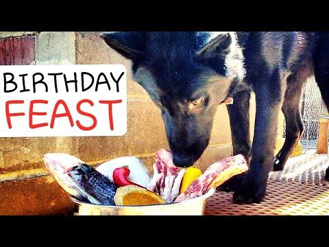 How I Feed RAW Food to My Dogs on Their Birthday - Ulu's Birthday Mukbang Feast