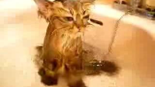 Кот в ванне.flv