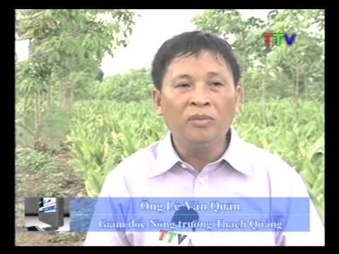 Bản tin Đài truyền hình Thanh Hóa về Nghệ Việt
