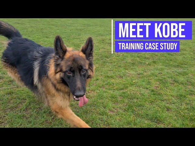 Teaching calm behaviour to a reactive German Shepherd