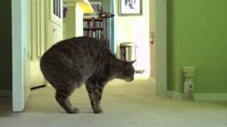Отпугиватель кошек