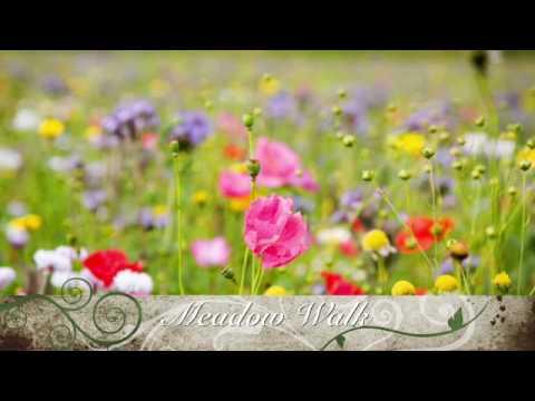 Guided Meditation - Meadow Walk