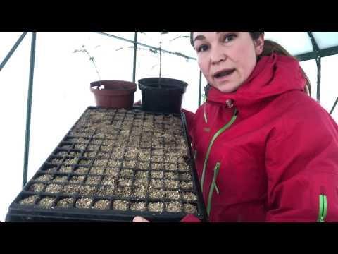 Pluggbrätten 3 viktiga anledningar till varför pluggbrätten är toppen i växthus och så här väljer du