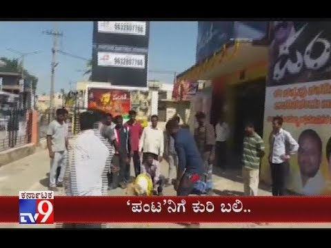 Sheep Scarified Ahead of `Naa Panta Kano` Movie Release in Kolar