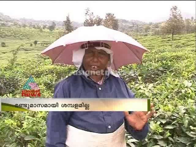Peerumed tea company again in crisis :പീരുമേട് ടീ കമ്പനി പ്രതിസന്ധിയിൽ
