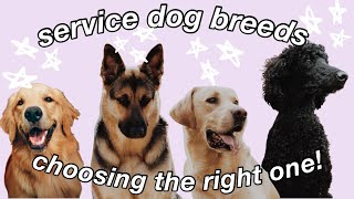 SERVICE DOG BREEDS || choosing the right one :)