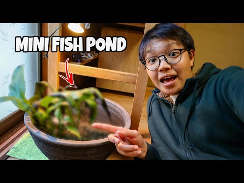 My DIY Indoor MINI FISH POND!