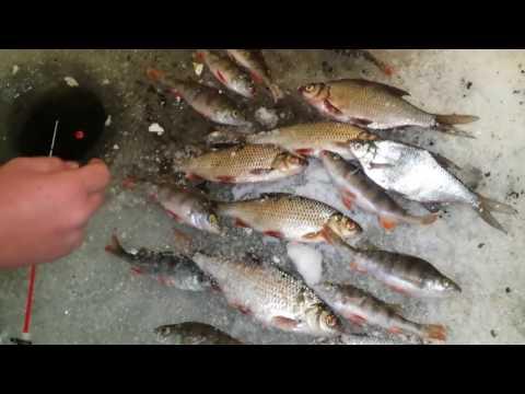 Рыбалка рефтинское водохранилище зимний