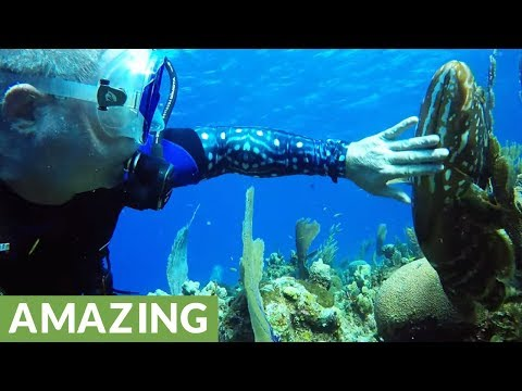 Giant fish follows scuba divers to get his chin rubbed