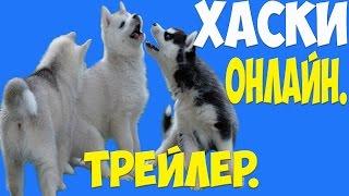 Хаски онлайн .Нижний Новгород.#1