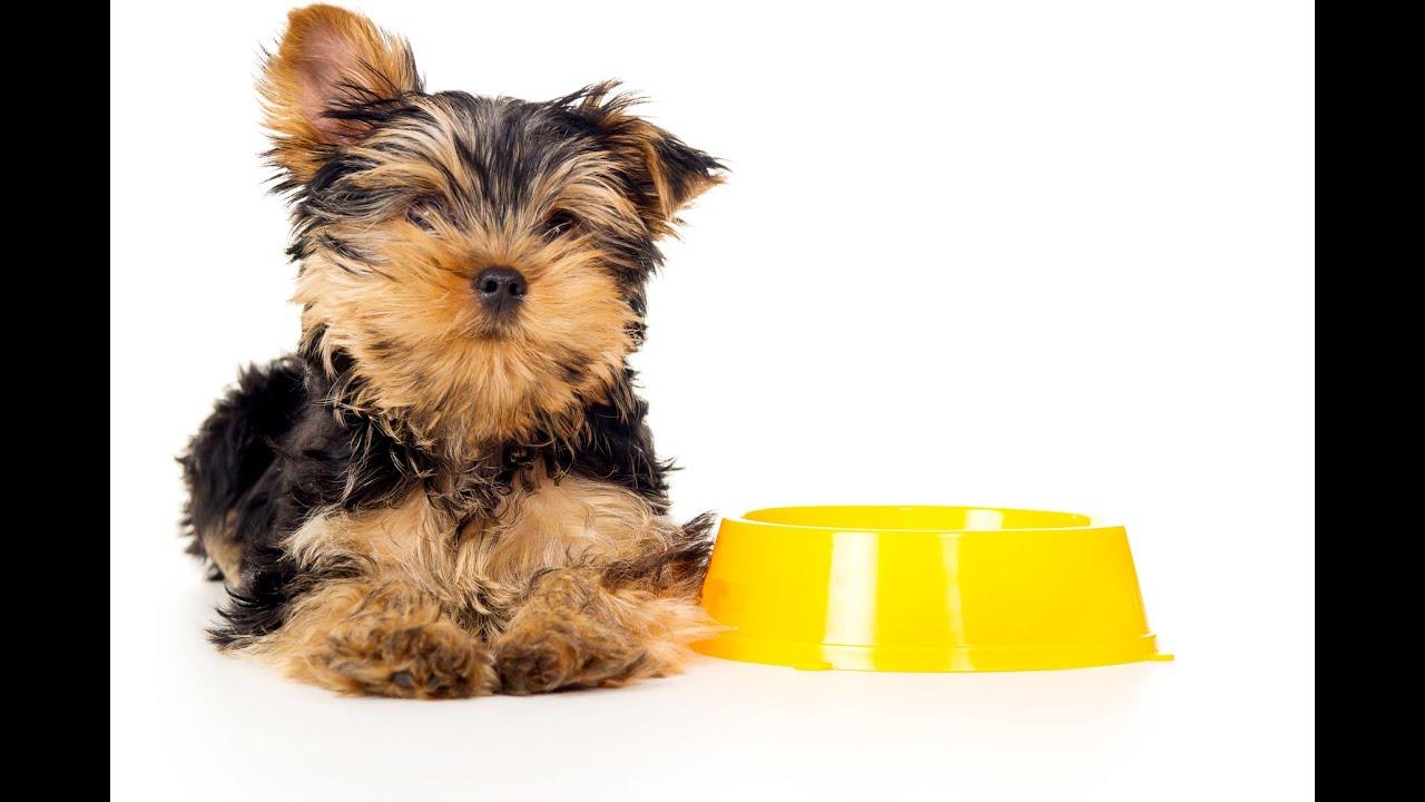 hogyan lehet segíteni a kiskutyának a fogyásban