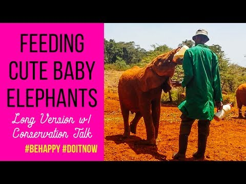 (Long Version) Feeding Cute Baby Elephants in Nairobi Kenya #Africa #Elephants #Conservation