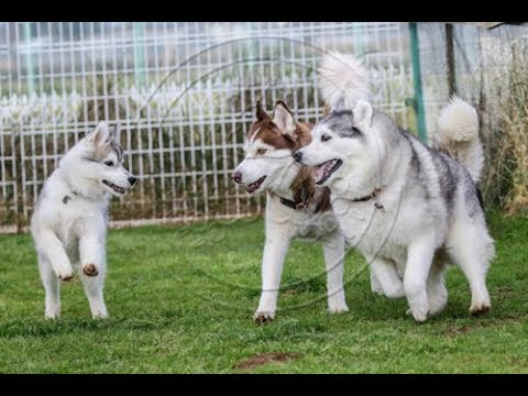 Dogs playing at the dog park #185
