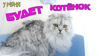 Что нужно котёнку? Готовимся к покупке котёнка!!!
