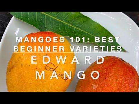 MANGOES 101: BEST BEGINNER VARIETIES: EDWARD MANGO