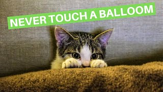 FUNNY CATS SCARED of BALLOMS 🙀🎈