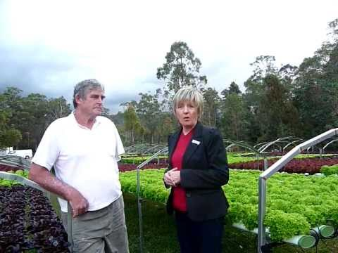 2 GOLD COAST FREEHOLD HYDROPONIC FARMS - FOR SALE