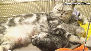 Four New Kittens, One Day Old - Born 21.02.2019 | Meo Cover Home
