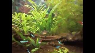 Video 5.Karmienie rybek w moim akwarium 98l download MP3, 3GP, MP4, WEBM, AVI, FLV November 2018