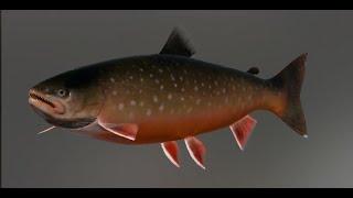 Русская рыбалка 4 о Ладожское Палия Судак