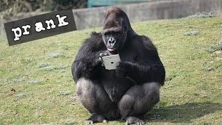 Download Broma gorila-Smile Entertainment Mp3