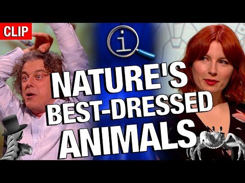 QI | Nature's Best-Dressed Animals