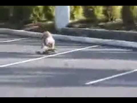 Když je v cestě ŠELMA kočkovitá !! (PSI vs KOČKY) from YouTube · Duration:  3 minutes 5 seconds