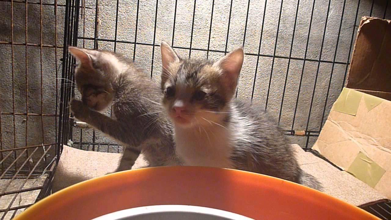 20140421黑貓4號生小貓第34天-幼貓看鏡頭--流浪貓 黑貓 懷孕 生產幼貓 誘捕籠TNR 認養 - YouTube