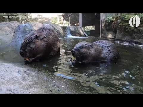 Oregon Zoo welcomes