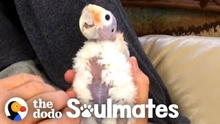 This Guy Wasn't A Bird Fan Until He Met This Little Bald Cockatoo | The Dodo Soulmates