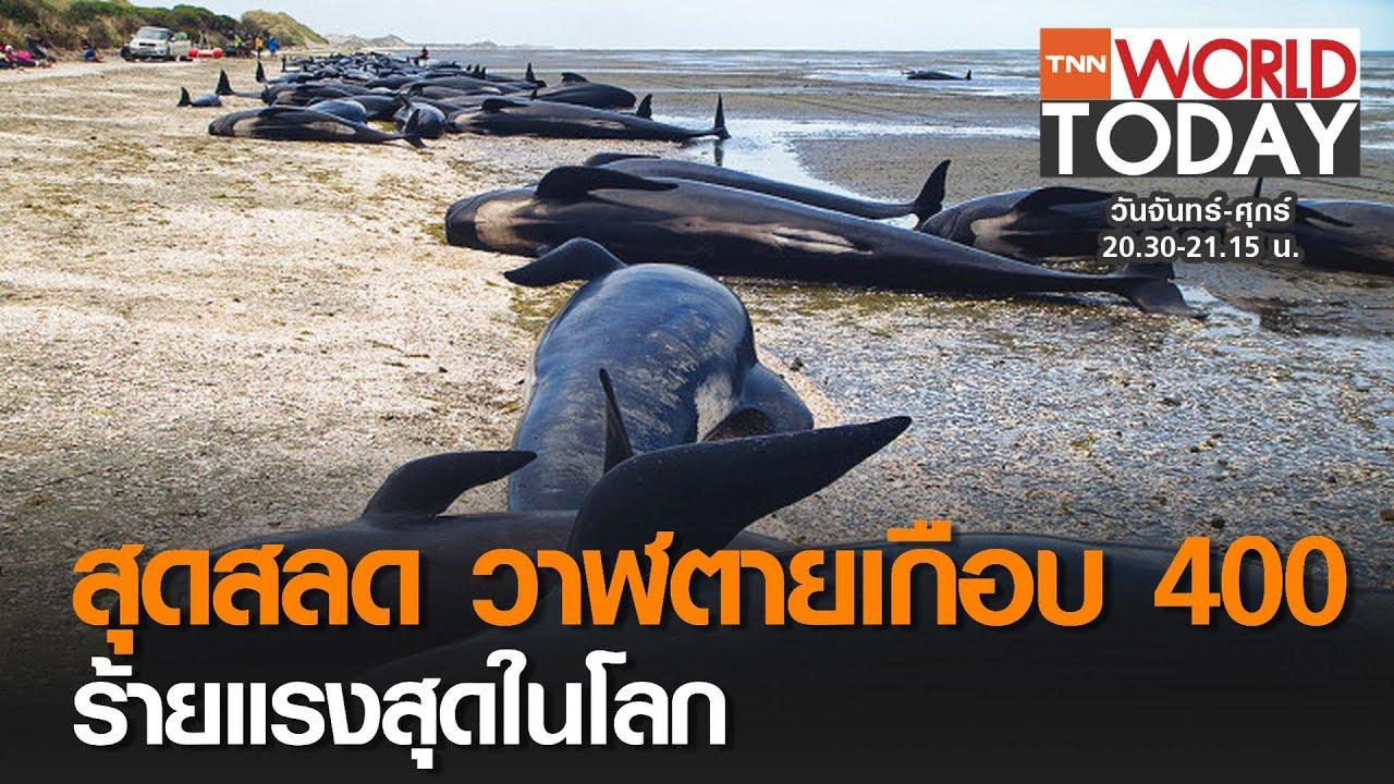 สุดสลด วาฬตายเกือบ 400 ร้ายแรงสุดในโลก l TNN World Today