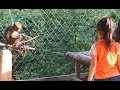 How to make fun with monkey   Monkey funny video   Kompong Cham  Cambodia