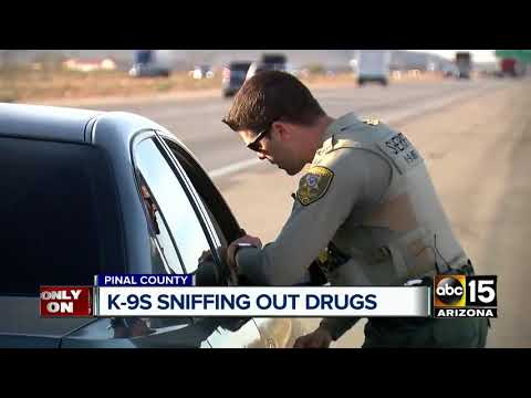 Pinal County K-9s sniffing out drugs
