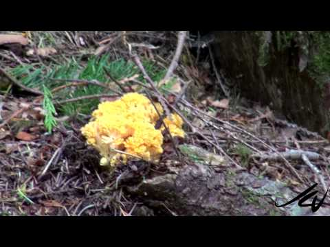The Tree of Life -  Vancouver Island Travel - YouTube