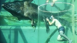 This Cage Of Death Lets You Swim With Crocodiles