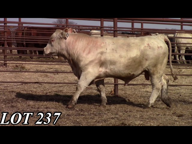 Mead Angus Farms Lot 237