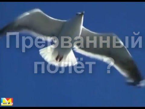 Прерванный полёт?... о судьбе студии Марии Карпинской