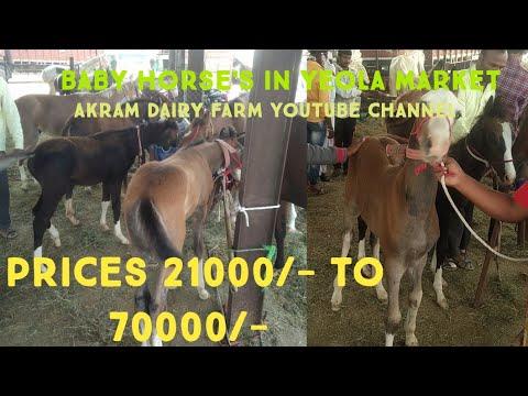 Baby Horse For Sale   Saste Ghode   Yeola Horse Market 2020   Baby Horse Market