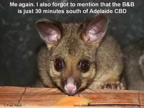 """Guest recommendations for """"The Gums"""" Bed & Breakfast, Adelaide, South Australia"""